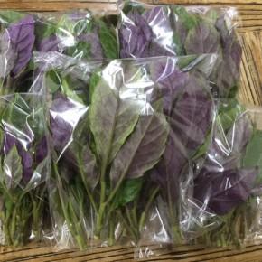 8/16(thu)本日の仕入れです。  糸満市 金城聡さんの無農薬栽培のハンダマが入荷しました!