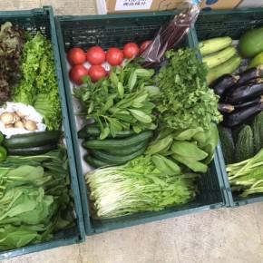 やんばるから森さんの無農薬栽培の野菜が到着しました!  本日の入荷はゴーヤー・パクチー・リーフレタス・サニーレタス・ちんげん菜・シビラン・水菜・からし菜・小松菜・ナス・水なす・トマト・ズッキーニ・ピーマン・きゅうり・パパイア・ヘチマ・マッシュルームです。県産ではこの時期にあまりない野菜がたくさん入荷しました!!