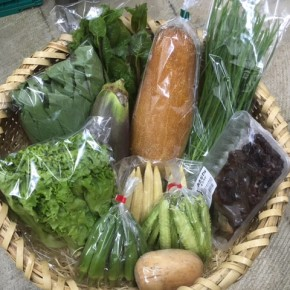 【第81回目】わが家のハルラボ商店『お野菜おまかせBOX』は8/27(mon)・28(tue)・29(wed)予約受付!9/1(sat)発送。受付はお電話にて承ります。☎098-943-9575(詳細はコチラをクリック)※写真は前回の野菜BOXです。