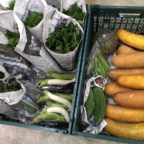 今帰仁村 片岡農園さんの無農薬栽培の無農薬栽培のモーウィ・なす・かぼちゃ・ウンチェバー・ツルムラサキ・モロヘイヤ・青しそ・オクラが入荷しました!