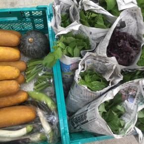 今帰仁村 片岡農園さんの無農薬栽培の無農薬栽培のモーウィ・なす・かぼちゃ・ウンチェバー・ツルムラサキ・モロヘイヤ・青しそ・赤しそ・バジル・オクラが入荷しました!