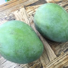 西原町 呉屋さんの無農薬栽培のキーツマンゴーが入荷しました!