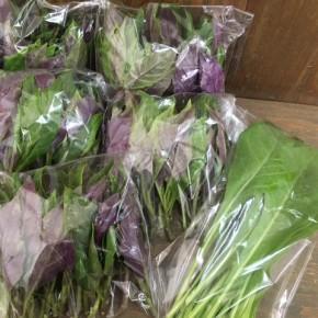 8/9(thu)本日の仕入れです。  糸満市 金城聡さんの無農薬栽培のハンダマ・ニガナが入荷しました!