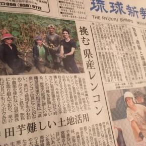 ウークイの今日8/25(sat)の琉球新報一面で、沖縄れんこんの記事を載せて頂きました。Web版はコチラ→https://ryukyushimpo.jp/news/entry-790118.html