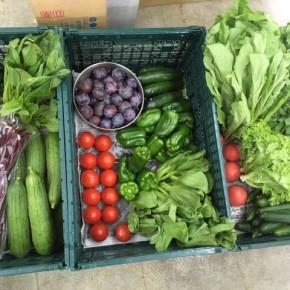 やんばるから森さんの無農薬栽培の野菜が到着しました!  本日の入荷はプラム・パクチー・リーフレタス・ちんげん菜・水菜・シビラン・からし菜・小松菜・長なす・中玉トマト・リコエラトマト・ズッキーニ・ピーマン・きゅうり・ゴーヤー・へちま・ホロー豆です。