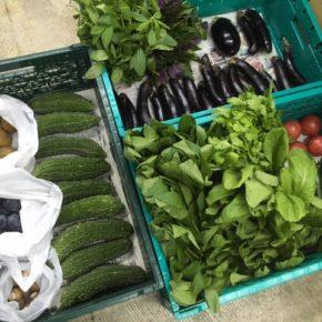 やんばるから森さんの無農薬栽培の野菜が到着しました!  本日の入荷はプラム・サルナシ・ゴーヤー・からし菜・小松菜・水菜・ちんげん菜・きゅうり・マッシュルーム・中玉トマト・茄子・シビラン・ハンダマです。
