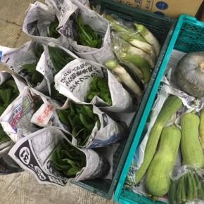 今帰仁村 片岡農園さんの無農薬栽培の小松菜・なす・ナーベラー・かぼちゃ・ウンチェバー・ツルムラサキ・モロヘイヤ・青しそ・オクラが入荷しました!
