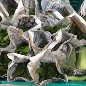 今帰仁村 片岡農園さんの無農薬栽培の茄子・ナーベラー・小松菜・リーフレタス・ツルムラサキ・モロヘイヤ・青しそ・穂じそが入荷しました!
