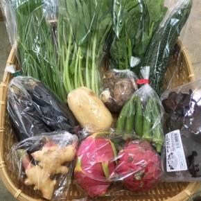 【第81回目】わが家のハルラボ商店『お野菜おまかせBOX』は先週土曜日に発送いたしました。今回の内容は自然栽培のれんこん・丸オクラ・にら、  無農薬栽培のなす・ゴーヤー・小松菜・新生姜・里芋・ツルムラサキ・ドラゴンフルーツ(赤&白)キクラゲをお送り致しました。次回受付は9/10(mon)・11(tue)・12(wed)お電話にて承ります。☎098-943-9575(詳細はコチラをクリック)