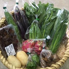 【第83回目】わが家のハルラボ商店『お野菜おまかせBOX』は9/25(tue)・26(wed)予約受付!9/29(sat)発送。受付はお電話にて承ります。☎098-943-9575(詳細はコチラをクリック)     長いことご愛顧頂きました『お野菜おまかせBOX』ですが、10月より送料が大幅に値上がりするため、今までの内容でのお届けが難しくなりました。  今回9/29(sat)発送分を持ちまして一旦終了し、また準備が整い次第ご案内させて頂きます。※写真は前回の野菜BOXです。
