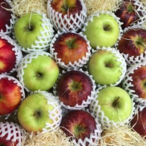 お待たせしました!山口県から減農薬のリンゴが入荷しました。今年は干ばつで小さめサイズ。しかも台風で収穫量が減っている中で今年も送って頂くことができました。今回は紅玉、秋映、新世界、ぐんま名月の4種。12月まで食べ頃の品種が届きます!