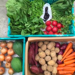 名護市森さんの無農薬栽培の野菜が入荷しました!  本日の入荷は、プラム・赤玉ねぎ・人参・パパイヤ・ルッコラ・中玉トマト・パクチー・リーフレタス・からし菜・玉ねぎ・じゃがいも・さつまいも・紅高・小松菜・ちんげん菜です。