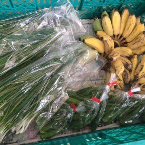 うるま市 玉城勉さんの自然栽培の銀バナナ・丸オクラ、北中城村ソルファコミュニティさんの自然栽培のネギが入荷しました!