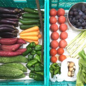やんばるから森さんの無農薬栽培の野菜が到着しました!  本日の入荷は人参・からし菜・ピーマン・アスパラ・さつまいも・茄子・マッシュルーム・ガーヤー・ゴボウ・万願寺とうがらし・中玉トマト・リコエラトマト・プラム・ズッキーニです。