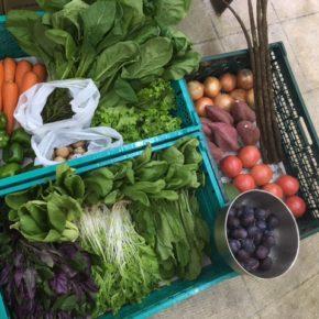 やんばるから森さんの無農薬栽培の野菜が到着しました!  ハンダマ・リーフレタス・からし菜・ちんげん菜・水菜・大玉トマト・ピーマン・パパイヤ・マッシュルーム・人参・ごぼう・プラム・玉ねぎ・さつまいも・小松菜・たらの芽が入荷しました。