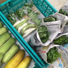 今帰仁村 片岡農園さんの無農薬栽培の茄子・ナーベラー・小松菜・オクラ・ピーマン・モーウィ・ツルムラサキが入荷しました!