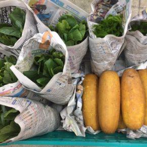 今帰仁村 片岡農園さんの無農薬栽培の小松菜・モーウィ・ツルムラサキが入荷しました!