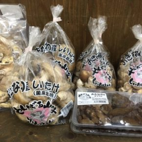 やんばる産おがくずで菌床栽培された生椎茸・キクラゲが入荷しました!