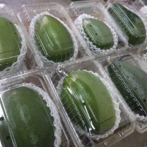 毎年ご好評いただいています、県産 無農薬栽培のアボカドが入荷しました!