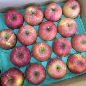 ご好評いただいている山口県産 減農薬のリンゴが入荷しました!  今シーズン最後の入荷となります。