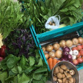 やんばるから森さんの無農薬栽培の野菜が到着しました!  ハンダマ・パクチー・椎茸・トマト・玉ねぎ・ちんげん菜・からし菜・水菜・ほうれん草・小松菜・ゴボウ・にんにく・きゃべつ・大根・ヤングコーン・パプリカ・マッシュルーム・人参が入荷しました。