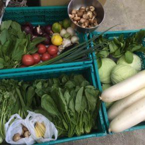 やんばるから森さんの無農薬栽培の野菜が到着しました!  パクチー・きゃべつ・ほうれん草・小松菜・なす・ヤングコーン・椎茸・マッシュルーム・大根・ネギ・ゴボウ・九条ネギ・赤玉ねぎ・にんにく・レモン・ちんげん菜・大玉トマトが入荷しました。