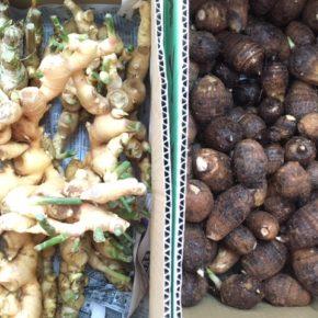 マサヨさんの無農薬栽培の生姜・里芋が入荷しました!
