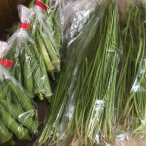 うるま市 玉城勉さんの自然栽培の丸オクラ、北中城村ソルファコミュニティさんの自然栽培のニラが入荷しました!