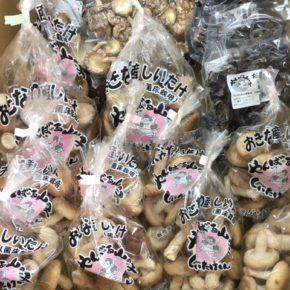 やんばる産の乾燥キクラゲ・乾燥椎茸・生椎茸が入荷しました!