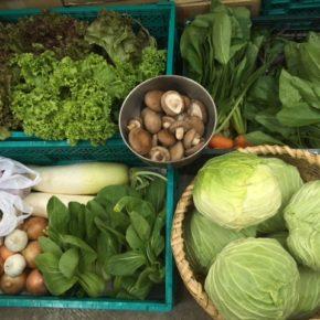 やんばるから森さんの無農薬栽培の野菜が到着しました!