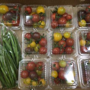 八重瀬町 くりきんふぁーむ自然栽培のカラフルミニトマト・サヤインゲンが入荷しました!