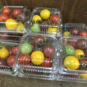 12/20(thu)くりきんファームさんの自然栽培のカラフルミニトマトが入荷しました!