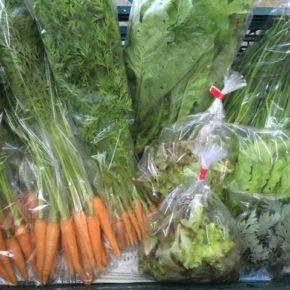 北中城村 ソルファコミュニティさんの自然栽培の野菜が入荷しました!