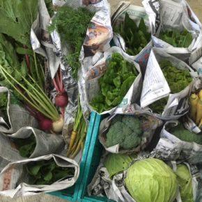 今帰仁村 片岡さんの野菜が入荷しました!