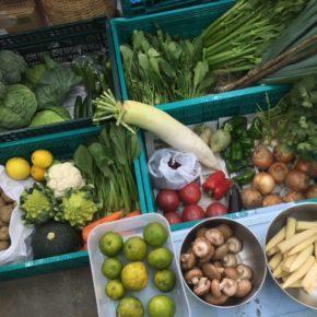 やんばるから森さんの無農薬栽培の野菜が入荷しました!  今日は種類も豊富です。