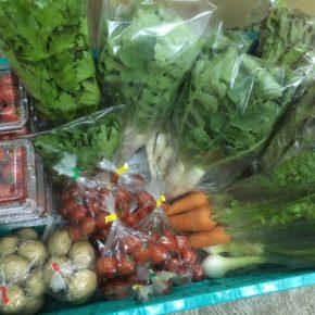 うるま市 玉城勉さん、北中城村 ソルファコミュニティさん、八重瀬町 島袋悟さん、久手堅憲也さんの自然栽培・無農薬栽培の野菜が入荷しました!