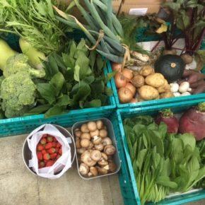 やんばるから森さんの無農薬栽培の野菜が入荷しました!本日はなんと、イチゴも初入荷!!