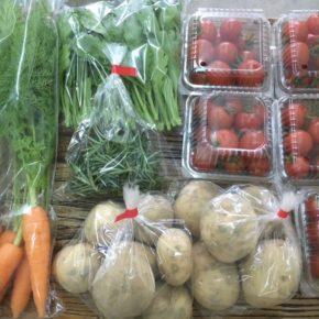 北中城村 ソルファコミュニティさん、八重瀬町 久手堅憲也さんの自然栽培・無農薬栽培の野菜が入荷しました!