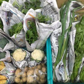 今帰仁村 片岡農園さんの無農薬栽培の野菜が入荷しました!