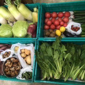 やんばるから森さんの無農薬栽培の野菜が入荷しました!