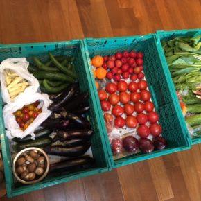 大玉トマト・ミニトマト・プラムもありますよ〜。  やんばるから森さんの無農薬栽培の野菜が入荷しました!