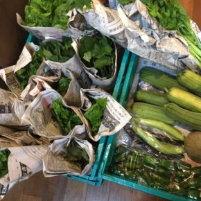 本日6/10(mon)夕方、今帰仁村 片岡農園さんの無農薬栽培の野菜が入荷します!※写真は先週の入荷野菜です。