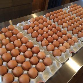 台風の影響で入荷が遅れていました、山口県 秋川牧園の卵・鶏肉・黒豚肉が入荷しました!エサは全てNON-GMOの植物性で、トウモロコシはポストハーベストフリー。また、定期的に卵とエサの放射能検査を行っています。卵はバラ売りで販売しますので、できましたら卵ケースをご持参下さい。 秋川牧園の卵の黄身は自然な黄色。卵臭さもないので卵かけご飯でも美味しいです。