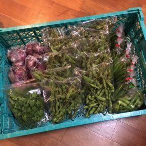 八重瀬町 島袋悟さんの自然栽培の丸オクラ・枝豆、南風原町 金城クン知念クンの自然栽培の赤玉ねぎ・イタリアンパセリが入荷しました!