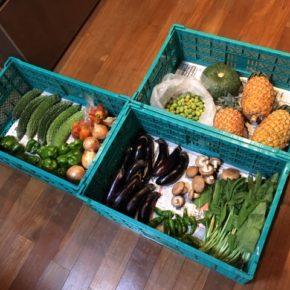 長雨が続いて県産野菜が少ない中、やんばるから森さんの無農薬野菜が入荷しました!