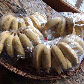 西原町 呉屋さんの無農薬栽培の島バナナが入荷しました!