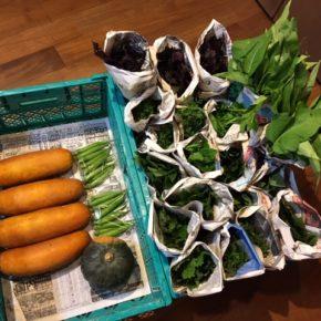 今帰仁村 片岡農園さんの無農薬栽培の野菜が入荷しました!  パクチー・青しそ・赤しそ・モロヘイヤ・ツルムラサキ・おくら・空芯菜・モーウィ・かぼちゃが入荷しました!
