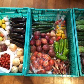 本日はプラムやジャガイモ、ミニトマトもありますよ〜!  やんばるから森さんの無農薬野菜やフルーツが届きました!!