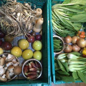やんばるから森さんの無農薬栽培の野菜が入荷しました!  玉ねぎ・ミョウガ・小松菜・ちんげん菜・椎茸・オクラ・ミニパプリカ・パッションフルーツ・バターナッツが入荷です。
