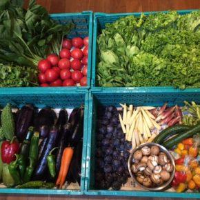 やんばるから森さんの無農薬栽培の野菜が入荷しました!  本日はレタス・トマト・人参・ゴーヤー・ズッキーニ・茄子・水茄子・へちま・ヤングコーン・パプリカ・ミョウガ・枝豆・小松菜・ちんげん菜・マッシュルーム・プラムが入荷です。